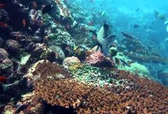 KOMODO DIVING TOUR