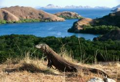 KOMODO ADVENTURE
